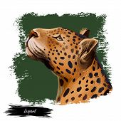 Leopard Watercolor Portrait Of Exotic Animal. Profile Of Panther Looking Aside. Felidae Family Membe poster