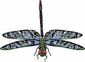 Green Darner Dragonfly Illustration
