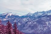 Surreal Mountain Landscape, Purple  Mountains And Snow-covered Christmas Trees poster