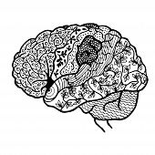 Black Contour Human Brain Is Painted With The Contours poster