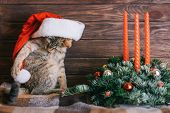 Cute Tabby Ginger Cat Playing With Pompon On Santa Claus Hat Near Christmas Decoration On A Wooden B poster