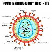 Structure Of Human Immunodeficiency Virus