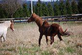 Frolicking Horse