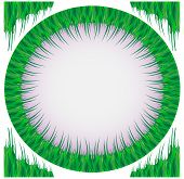 Frame from a green grass