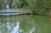 Wooden Bridge In Park