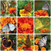 Collage With Butterflies