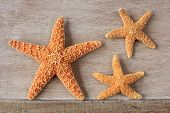 Starfish From The North Sea