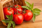 Tomatoes, Basil And A Basket