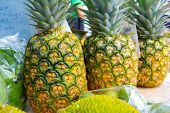 Pineapple Tropical Fruit