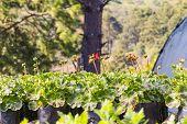 Blume-Pflanzenvermehrung
