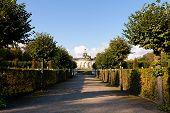 Hedges At Sanssouci