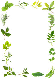 image of feverfew  - Herb leaf selection forming a frame over white background - JPG