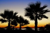 Palm Trees Silhouetted Against A Sunset