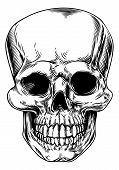 stock photo of lithographic  - A vintage human skull or grim reaper deaths head illustration - JPG