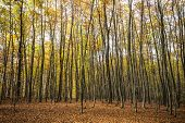 autumn forest trees. nature background