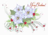Card With White Poinsettia