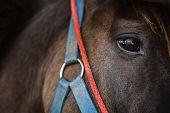 An Eye Of A Horse
