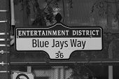 pic of blue jay  - A sign for Blue Jays way in Toronto - JPG