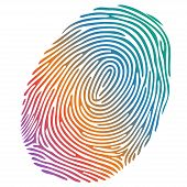 Vector Many-coloured Fingerprint On White Background