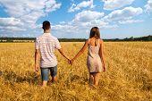 Young couple walking through  wheat field