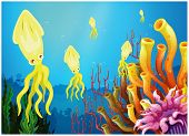 Illustration of the yellow squids near the coral reefs on a white background