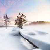 Wintry landscape