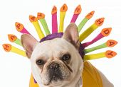 french bulldog wearing birthday headband