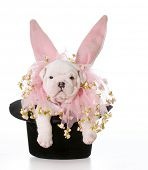 dog wearing bunny ears inside a black top hat