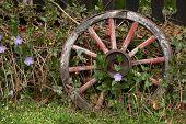 stock photo of wagon wheel  - Wooden wagon wheel Wooden wheel - JPG