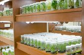 Plant Tissue Culture In The Laboratory