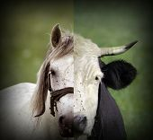 Abstract Montage Of Cow And Horse Heads