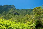 Iao Valley State Park On Maui Hawaii