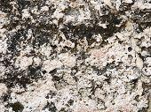 Porous Sandstone