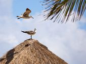 foto of playa del carmen  - Seagulls on thatched roof in Playa del Carmen Mexico - JPG
