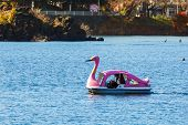 Swan Paddle Boat at Lake Kawaguchiko in Japan