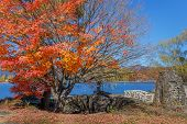 Red Maple Leaves In Autumn At Kawaguchiko Lake