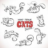 Sketch illustration of playful cats