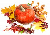Red Ripe Pumpkin And Autumn Leaves On White Background