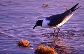 Gull on beach copy
