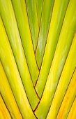 Texture And Pattern Detail Banana Fan