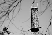 Bird Feeder Full Of Peanuts Hanging In A Tree