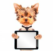 dog wearing a tie with tablet pc