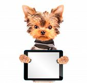 Puppy wearing scarf with tablet pc