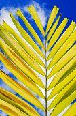 Petal Palm Leaf And Cloudy Blue Sky Background