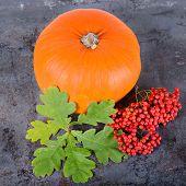 Square autumn composition