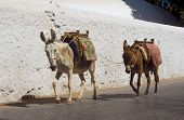 Two donkeys on the streets