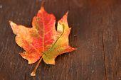 Dried Autumn Leaf On Wood