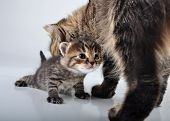Adorable Newborn Kitten With Mother