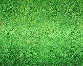 Greensward Footbal