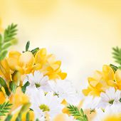 Spring yellow primrose, floral background